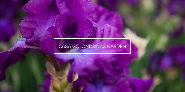 CASA GOLONDRINAS GARDEN